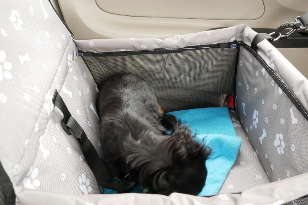 ペットボックスで眠るワンコ画像